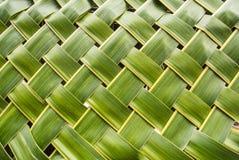 Hoja del coco de la forma de la textura Fotografía de archivo libre de regalías