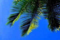 Hoja del coco y cielo azul Fotografía de archivo