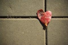 Hoja del corazón fotos de archivo libres de regalías