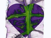 Hoja del corazón Fotos de archivo