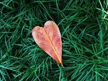 Hoja del corazón en hierba verde Imágenes de archivo libres de regalías