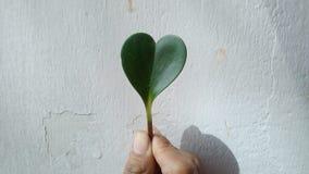 Hoja del corazón en una mano Fotos de archivo