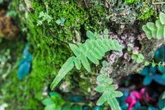 Hoja del helecho en árbol con el MOS Foto de archivo libre de regalías
