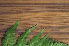 Hoja del helecho en fondo de madera Imágenes de archivo libres de regalías