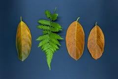 Hoja del helecho y hojas anaranjadas en fondo negro Hoja del otoño en la foto de la opinión de sobremesa Decoración estacional de fotografía de archivo