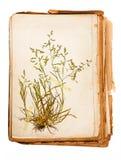 Hoja del herbario imagenes de archivo