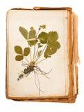 Hoja del herbario fotos de archivo