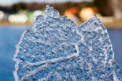 hoja del hielo Fotografía de archivo