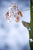 Hoja del invierno Imagen de archivo libre de regalías