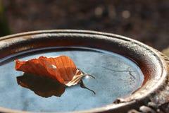 Hoja del invierno en un jarro Fotografía de archivo libre de regalías