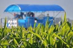 Hoja del maíz y maquinaria de cosecha cercanas imagenes de archivo