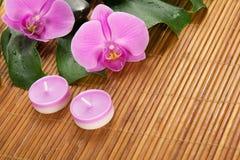 Hoja del monstera, de la orquídea, de la vela y de piedras imágenes de archivo libres de regalías