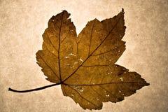 Hoja del otoño imagenes de archivo