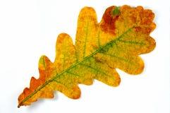 Hoja del otoño? Imagen de archivo
