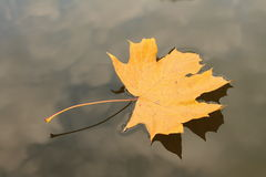 Hoja del otoño Fotos de archivo