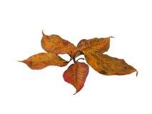 Hoja del otoño imagen de archivo libre de regalías