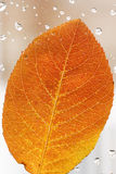 Hoja del otoño Foto de archivo libre de regalías