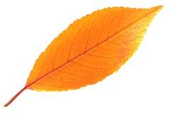 Hoja del otoño. Imagen de archivo