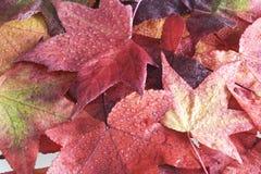 Hoja del otoño Imágenes de archivo libres de regalías