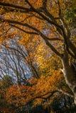 Hoja del otoño Fotografía de archivo libre de regalías