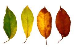 Hoja del otoño aislada fotos de archivo libres de regalías