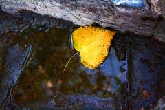 Hoja del otoño caida Imagen de archivo libre de regalías