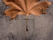 Hoja del otoño Composición mínima Fondo del otoño fotos de archivo