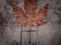 Hoja del otoño Composición mínima Fondo del otoño imagenes de archivo