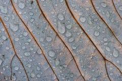Hoja del otoño con las gotas de agua Foto de archivo libre de regalías