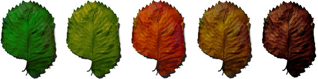 Hoja del otoño de la vida Foto de archivo libre de regalías