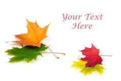 Hoja del otoño en blanco Imagen de archivo libre de regalías