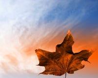 Hoja del otoño en cielo Imagen de archivo libre de regalías