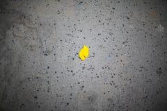 Hoja del otoño en el asfalto Imagenes de archivo