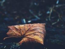 Hoja del otoño en el bosque Foto de archivo
