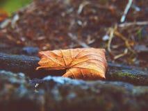 Hoja del otoño en el bosque Imágenes de archivo libres de regalías