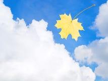 Hoja del otoño en el cielo Foto de archivo