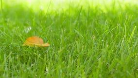 Hoja del otoño en el movimiento lento del carro del campo de hierba verde almacen de video