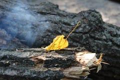 Hoja del otoño en el sol Fotos de archivo
