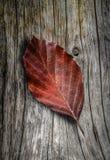 Hoja del otoño en fondo de madera Imagenes de archivo