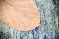 Hoja del otoño en fondo de madera Foto de archivo libre de regalías