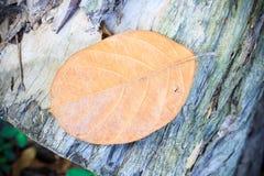 Hoja del otoño en fondo de madera Fotografía de archivo