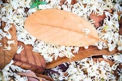 Hoja del otoño en fondo de madera Imagen de archivo
