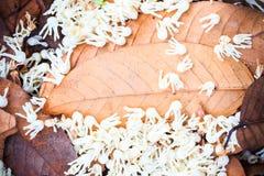 Hoja del otoño en fondo de madera Imágenes de archivo libres de regalías