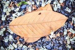 Hoja del otoño en fondo de madera Imagen de archivo libre de regalías