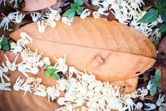Hoja del otoño en fondo de madera Fotos de archivo libres de regalías