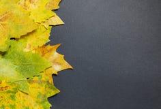 Hoja del otoño en fondo gris fotos de archivo