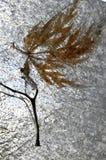 Hoja del otoño en hielo del invierno Fotos de archivo