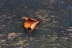 Hoja del otoño en la madera vieja Imagenes de archivo