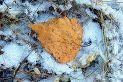 Hoja del otoño en la primera nieve Fotografía de archivo