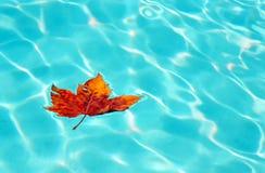Hoja del otoño en la superficie del agua fotos de archivo